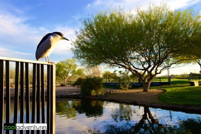 Wildlife, JW Marriott Phoenix Desert Ridge Resort & Spa, Phoenix,