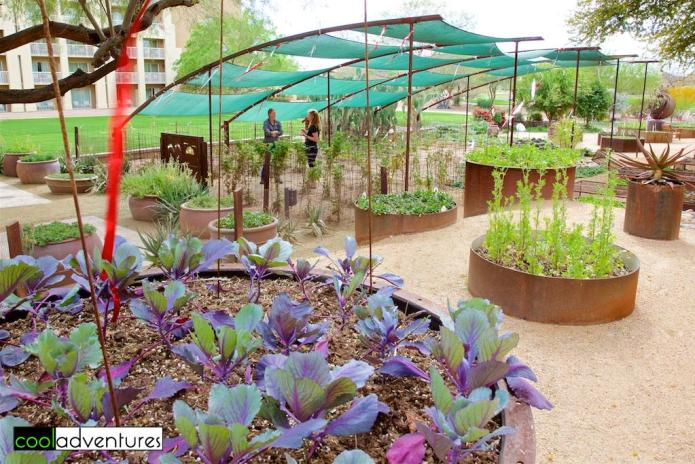 Chef's garden at JW Marriott Desert Ridge