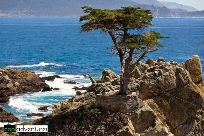 Lone Cypress, 17 Mile Drive, Monterey Peninsula, California
