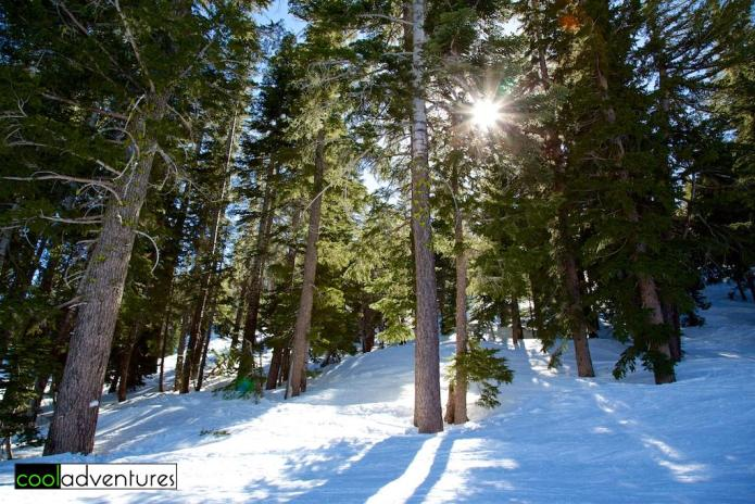 Kirkwood Ski Resort tree skiing