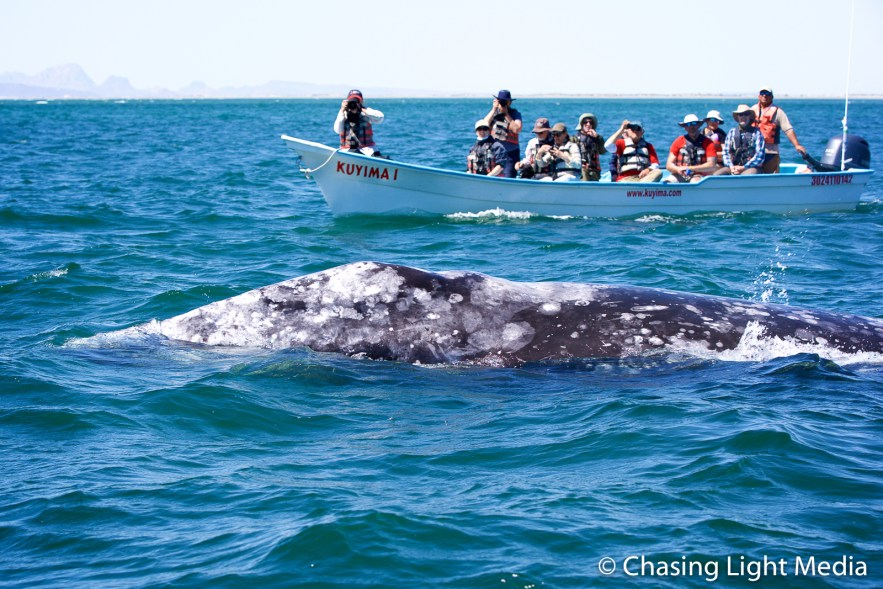 Kim Hull taking a photograph of a gray whale, San Ignacio