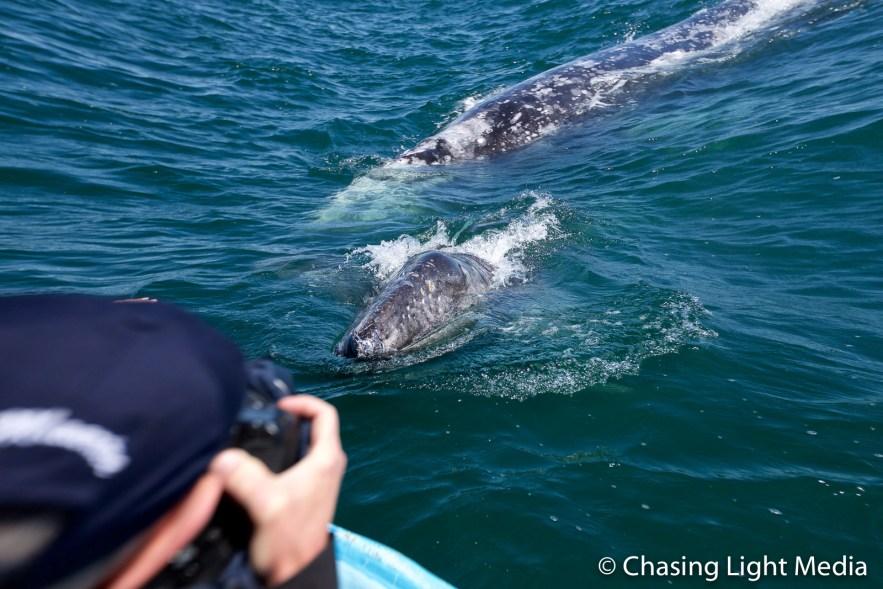 Greg Hull photographing grey whales at Laguna San Ignacio, Mexico
