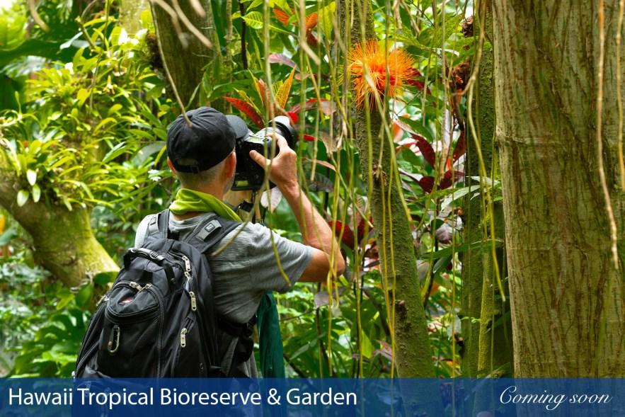 Hawaii Tropical Bioreserve & Garden photographs taken by Chasing Light Media