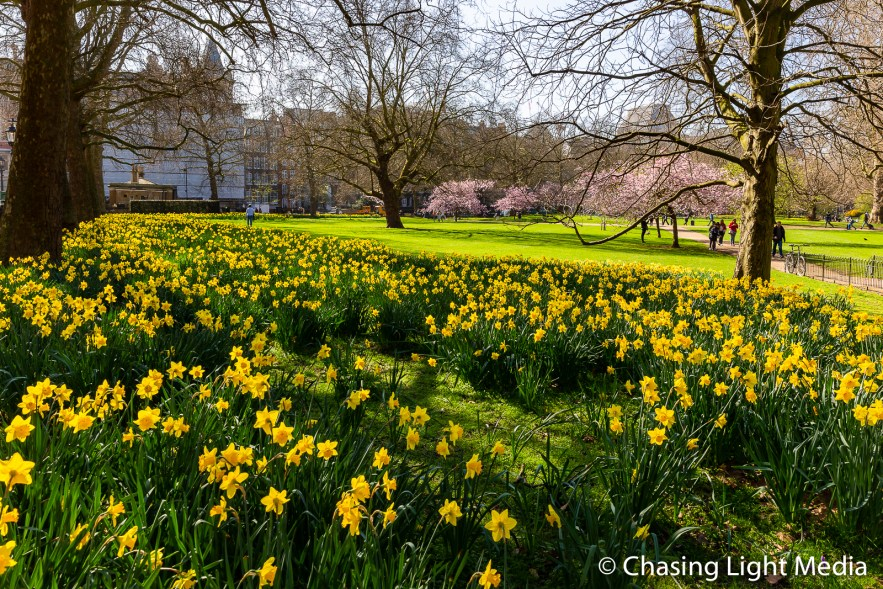Spring flowers blooming in St. James Park, London, England