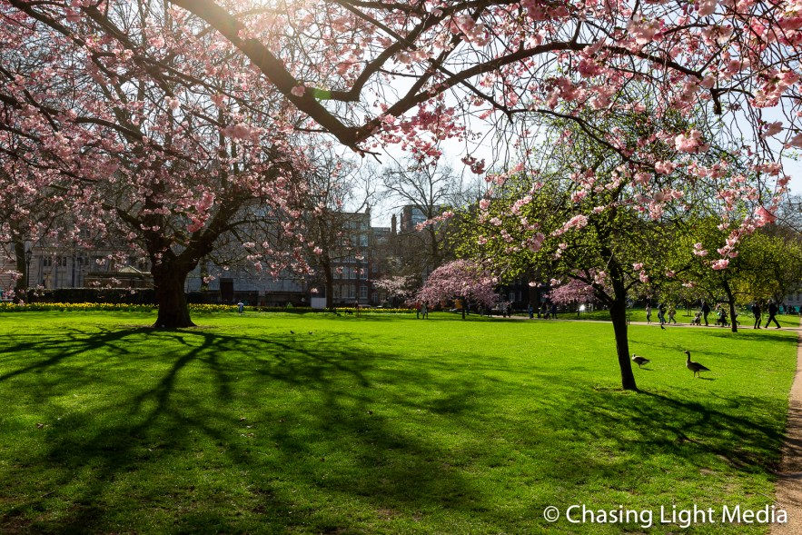 Springtime at St. James Park, London, England