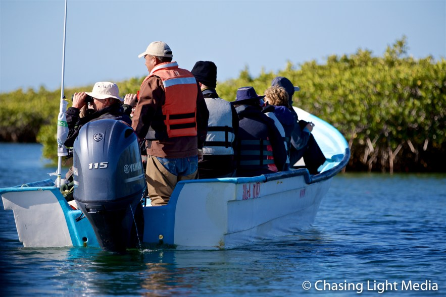 Searcher group birdwatching in the mangroves