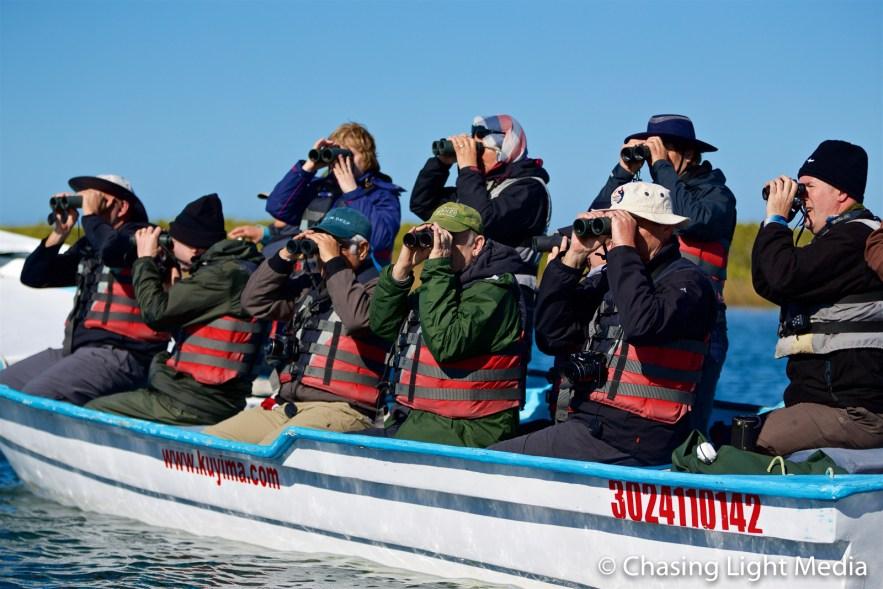 Searcher group birdwatching in the Laguna San Ignacio mangroves