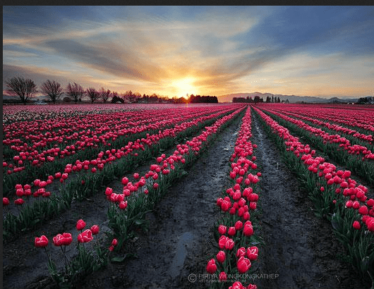 Landscape Photography: The Best Way to Explore Nature (21)