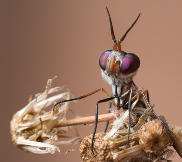 Some Magnificent Collection of Macro Photography (23)