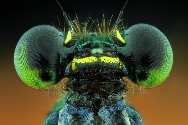 Some Magnificent Collection of Macro Photography (14)