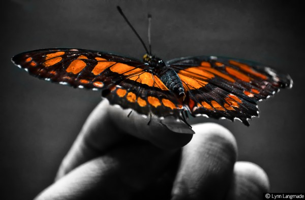 Some Magnificent Collection of Macro Photography (11)