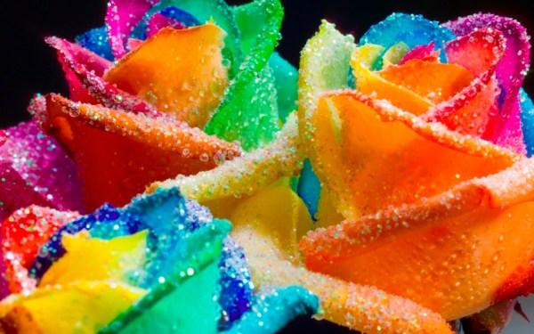 Happy Roses Rainbow Glitter