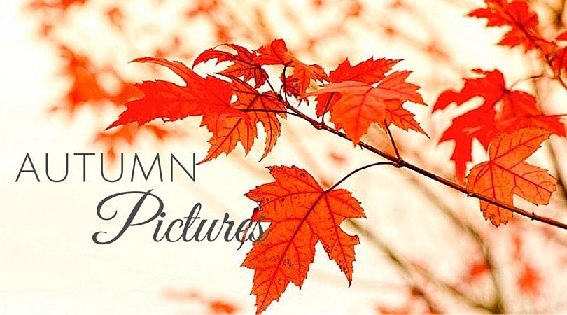 Amazing Autumn Pictures