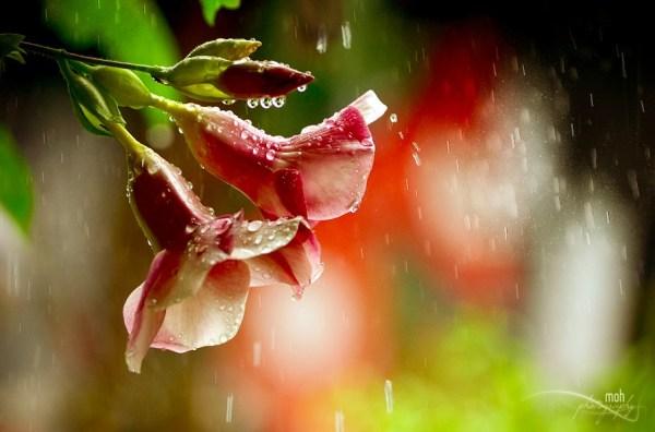 Monsoon Beauty