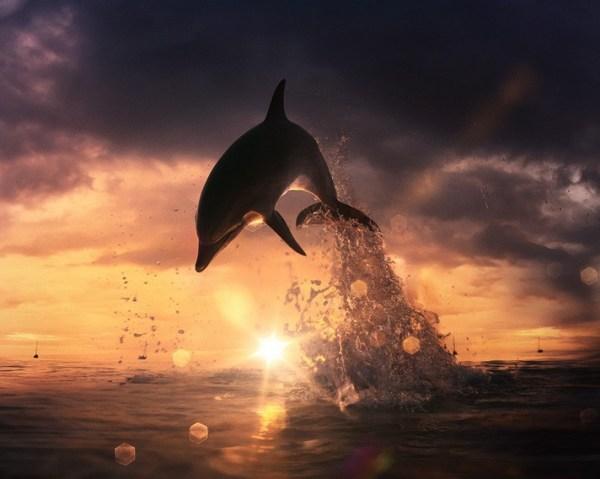 beautiful dolphin jumping from shining water