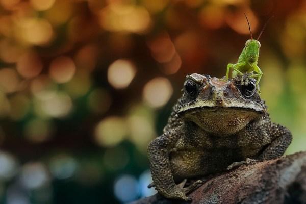 frog host