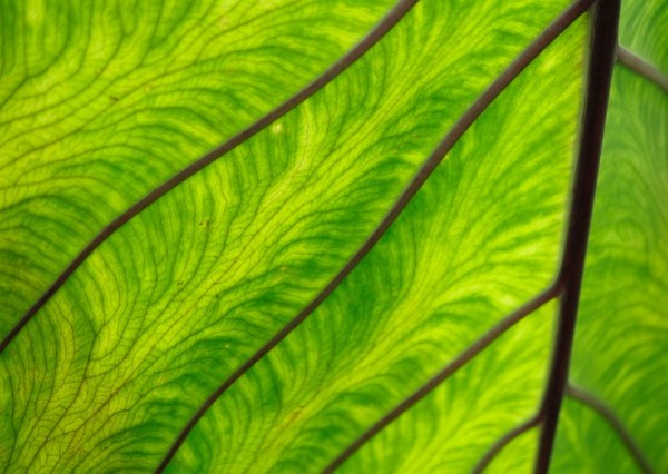 Green leaf alien