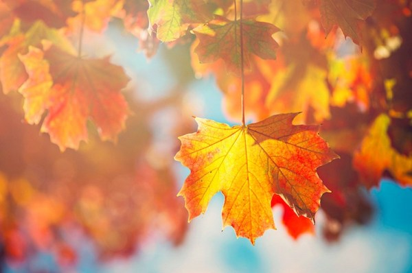 Here comes Autumn