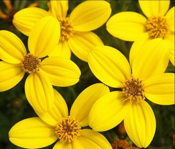 yellow is yellow here !!