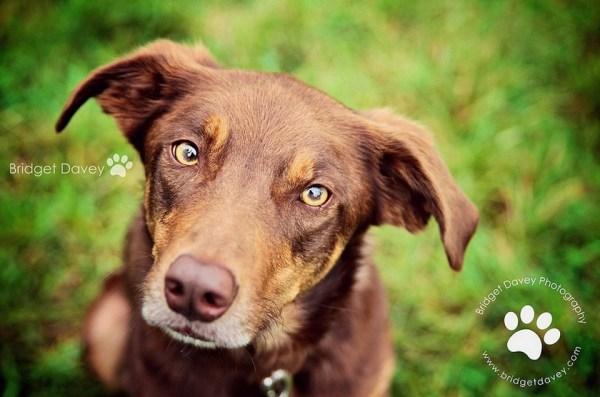 The Look   Pet Photography Leighton Buzzard