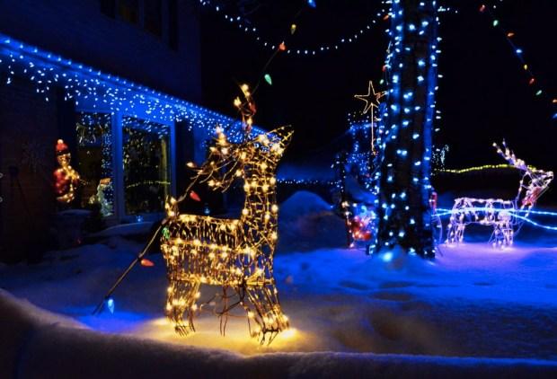 frozen-reindeer