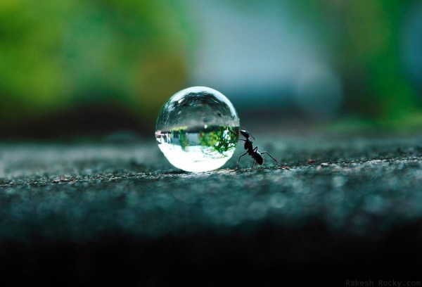 The Ants Dream