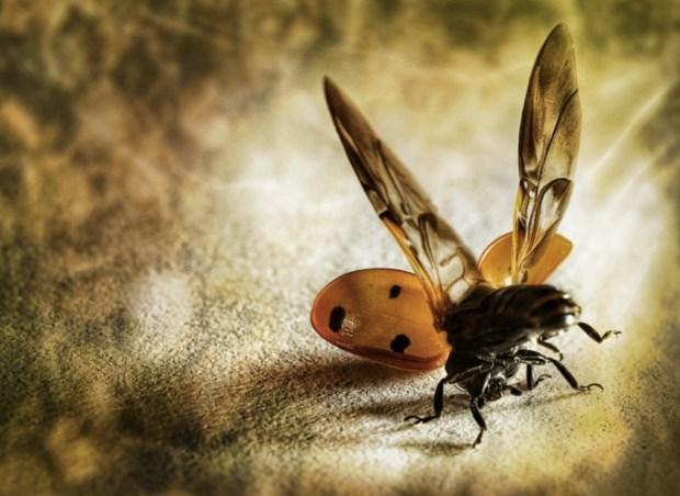 lady bug acrobat
