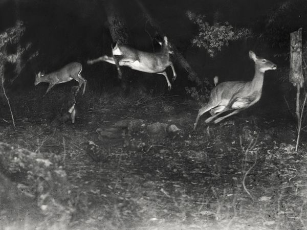 First Wildlife Photos in National Geographic