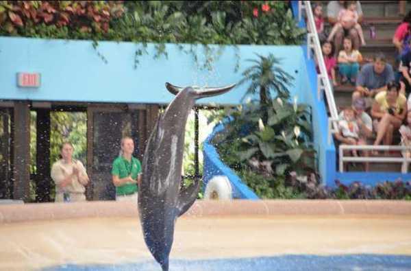 Brookfield Zoo Dolphin Show 073