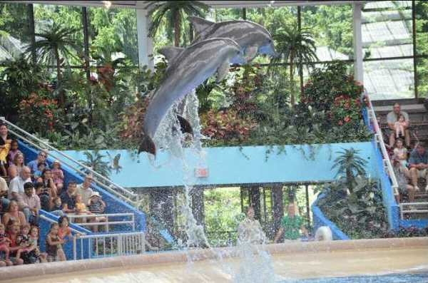 Brookfield Zoo Dolphin Show 121