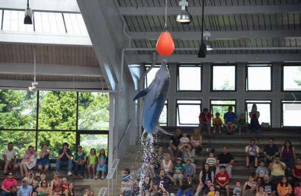 Brookfield Zoo Dolphin Show 127