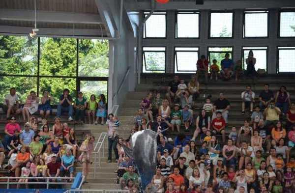 Brookfield Zoo Dolphin Show 129