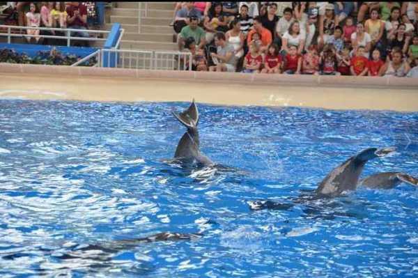 Brookfield Zoo Dolphin Show 132