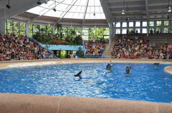 Brookfield Zoo Dolphin Show 133