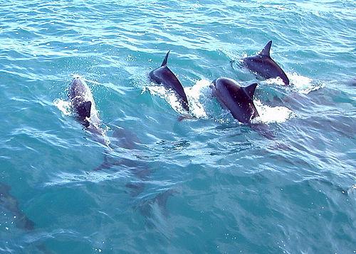 Dolphin Crest by Steve Jurvetson