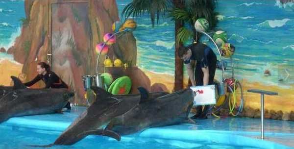 Dolphins are drawing a picture