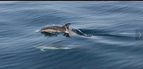 Double Decker Dolphins