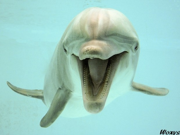 Dolphin happy to see you