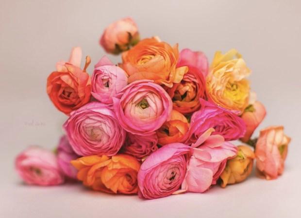 Ranunculus Florals