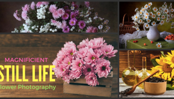 flower photography