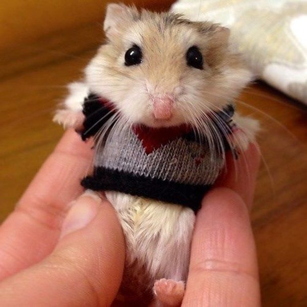 pictures of hamsters1