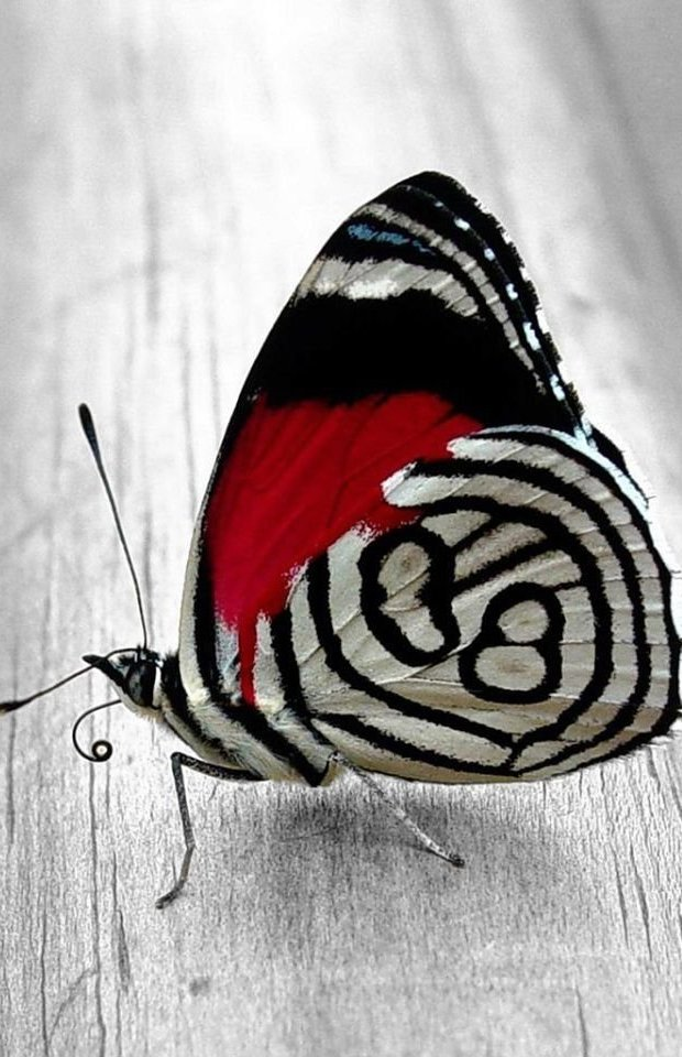 Butterfly Pictures8