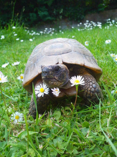 Pictures of Turtles10