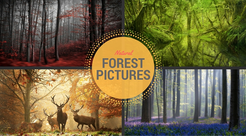Forest Pictures