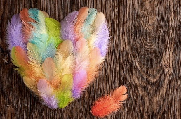 Heart made of colorful feathers on wood