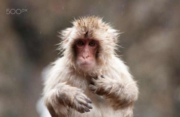 Rain Monkey