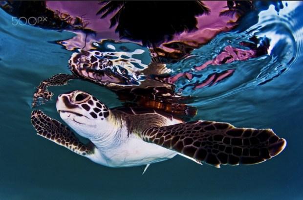 Turtle reflexion