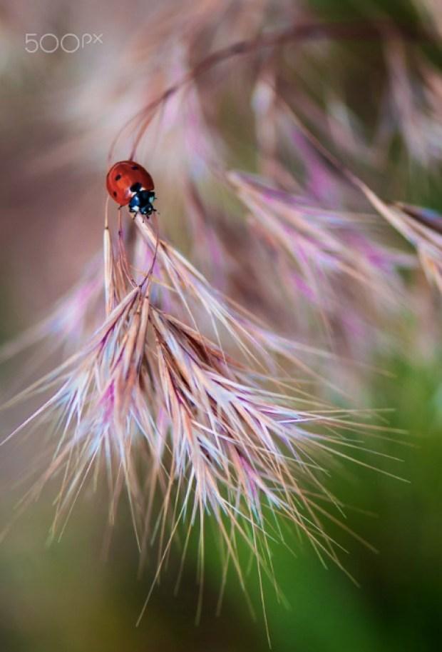 Ladybug in field