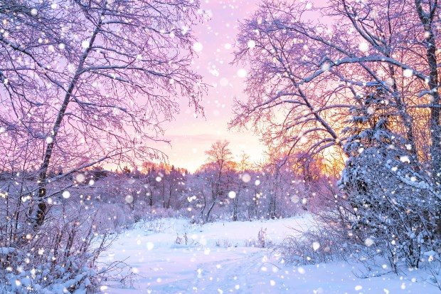 Forest, trees, sunrise, winterly morning | Nature wallpaper