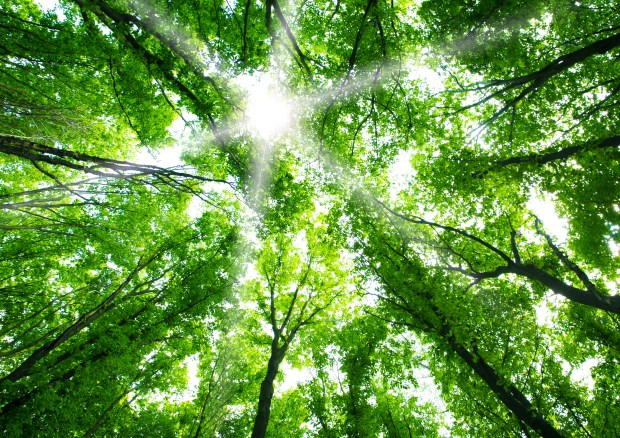 Green Forest Nature Background